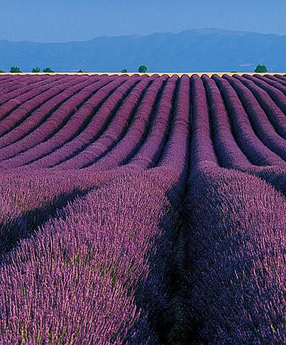 Provence, terre des arts