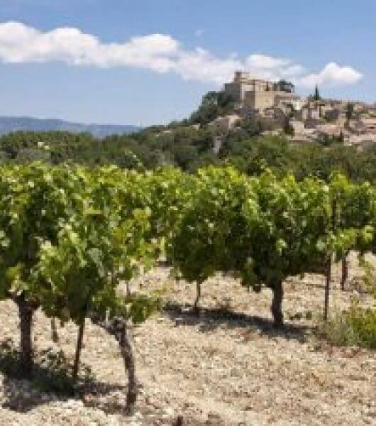 Grape harvest in France