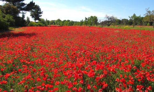 8 raisons de suivre un cours d'immersion française en Provence au printemps