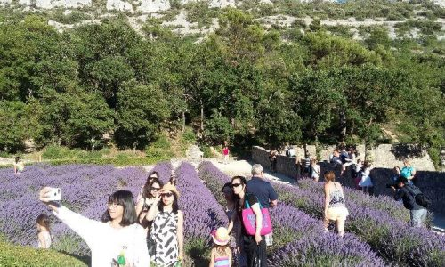 MY VACATIONS IN PROVENCE: A dream comes true